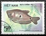 de Asia - Vietnam -  Peces - Trichogaster trichopterus