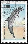 de America - Cuba -  Delfin manchado