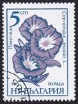 Sellos de Europa - Bulgaria -  convolvulus tricolor
