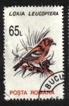 Sellos de Europa - Rumania -  Aves 1993-1996