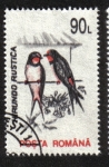 de Europa - Rumania -  Aves 1993-1996