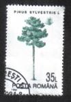 Sellos del Mundo : Europa : Rumania : Árboles, Pino Silvestre (Pinus sylvestris)