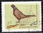 de Europa - Hungría -  Aves - Phasianus colchicus