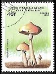 Sellos de Africa - Benin -  Setas - Stropharia cubensis