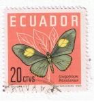 Sellos del Mundo : America : Ecuador : Graphius Paisianus