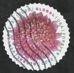 de America - Estados Unidos -  Crisantemo