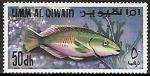 de Asia - Emiratos Árabes Unidos -  Peces - Parrotfish (Scarus sp.)