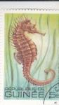 Stamps Guinea -  PEZ- caballito de mar