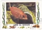 Stamps United Arab Emirates -  peces tropicales