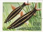 Stamps Nicaragua -  PEZ- anostomus