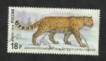Sellos del Mundo : Europa : Rusia :  7541 - Pantera pardus orientalis