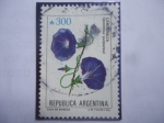 de America - Argentina -  Campanilla (Ipomoea purpurea) - Trepadora- ornamental.