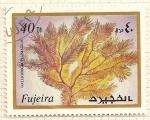 Stamps : Asia : United_Arab_Emirates :  Fujeira. Criaturas marinas. Galligorgia Plumatilis.