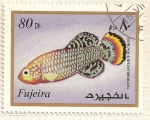 Sellos del Mundo : Asia : Emiratos_Árabes_Unidos : Fujeira. Criaturas marinas. Nothobranchius Rachovi.