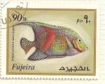Sellos del Mundo : Asia : Emiratos_Árabes_Unidos : Fujeira. Criaturas marinas. Pomacanthus Maculoso.