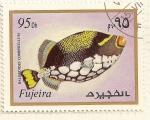 Stamps : Asia : United_Arab_Emirates :  Fujeira. Criaturas marinas. Balistoides Conspicillum.