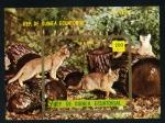 Sellos de Africa - Guinea Ecuatorial -  Gatos de Abisinia