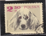 Stamps Poland -  PERRO