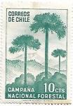 Sellos de America - Chile -  Araucaria, árbol nacional de Chile
