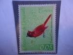 Sellos de America - Venezuela -  Cardenal Coriano (Richmondena phoenicea)