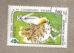 Stamps Romania -  1995 Año de la conservación de la naturaleza