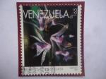 de America - Venezuela -  Orquídeas - Scaphyglottis Stellata - Serie: Orquideas.