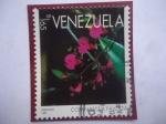 de America - Venezuela -  Orquídeas - Comparettia falcata - Serie: Orquídeas.
