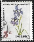 Sellos de Europa - Polonia -  Flores - Iris sibirica