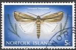 Sellos de Oceania - Australia -  Mariposas (Norfolk)