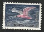 Sellos del Mundo : Europa : Rusia : 3803 - Ave marina, Mouette rosa