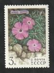 Sellos del Mundo : Europa : Rusia : 4367 - Flores de las montañas de Siberia, Dianthris repena