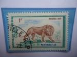 de Africa - República del Congo -  Congo República(Brazzaville)-León-Panthera Leo- Serie:Animales Salvajes-África Central