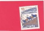 Stamps : America : Canada :  cabras salvajes