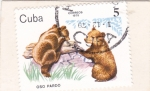 Stamps Cuba -  Oso pardo