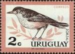 Stamps : America : Uruguay :  Zorzal de vientre rufo (Turdus rufiventris)