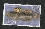 Stamps : Europe : Russia :  Buriatia - Fauna marina, Gobius Linnaeus