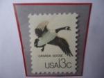 de America - Estados Unidos -  Canada Goose (Brat canadensi)- Ganso de Canadá.
