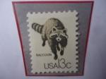 de America - Estados Unidos -  Raccoon (Procyon lotor) - Mapache.