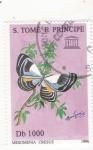 Stamps : America : São_Tomé_and_Príncipe :  Mariposa