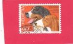 Stamps : Europe : Switzerland :  perro de raza