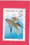 Stamps : Europe : Hungary :   Pez arco iris threadfin (Iriatherina werneri)