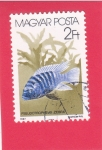 Stamps : Europe : Hungary :  pez Zebra Mbuna (Cebra pseudotrofes)