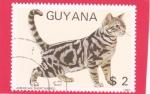 Stamps : America : Guyana :  GATO AMERICAN SHORTHAIRED