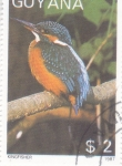 Stamps : America : Guyana :  ave