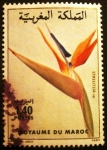 Sellos del Mundo : Africa : Marruecos : Flora. Strelitzia sp.