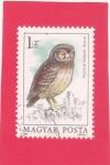 Stamps Hungary -  Búho Pequeño (Athene noctua)