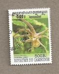 Stamps Cambodia -  Pulpo