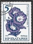 Stamps : Europe : Bulgaria :  Flores de jardín, enredadera - Convolvulus tricolor