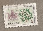 Sellos de America - Canadá -  Sanguiñuelo