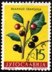 Stamps Yugoslavia -  PLantas : frangula